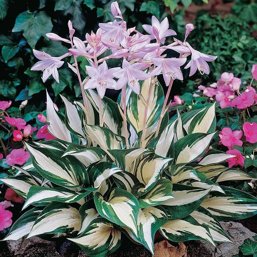 Ornamental Plants for Shade 8