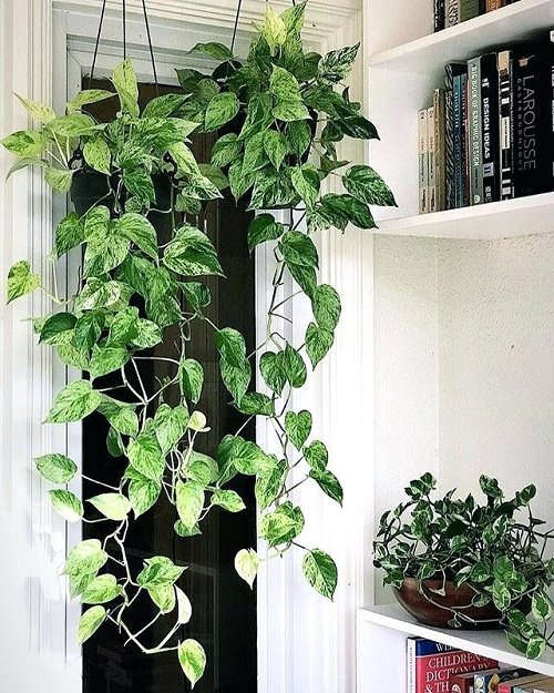 Best Plants for Gym 8