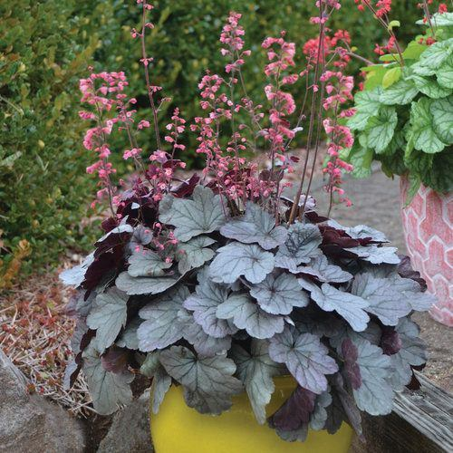 Ornamental Plants for Shade 9