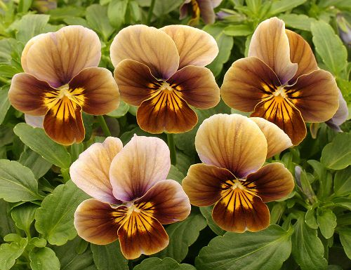 Types of Brown Flower Names