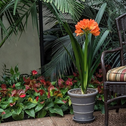 Ornamental Plants for Shade