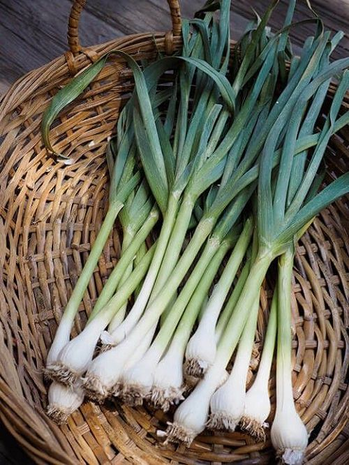 Is Garlic a Vegetable Herb or Spice
