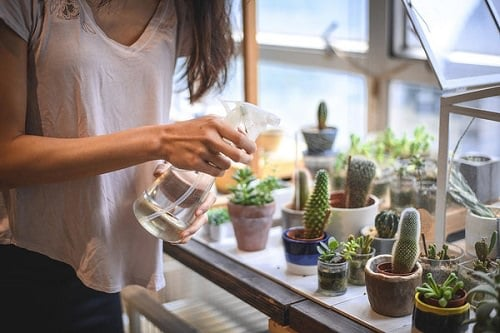 How Often To Water Succulents 2