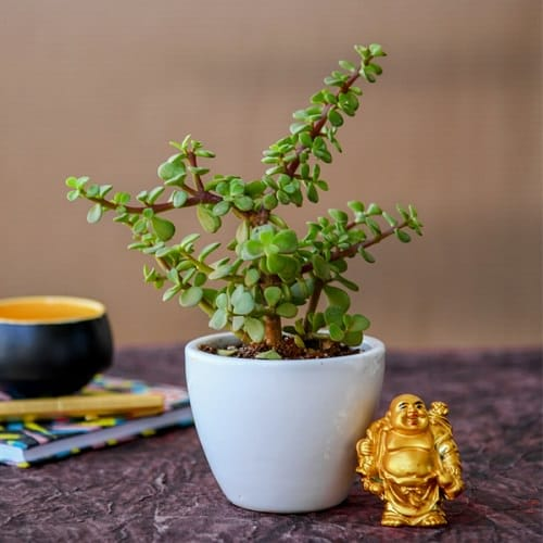 Best Plants for Gym 2