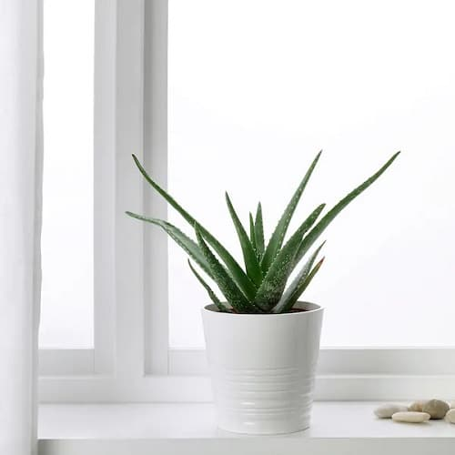 Best Plants for Gym 3