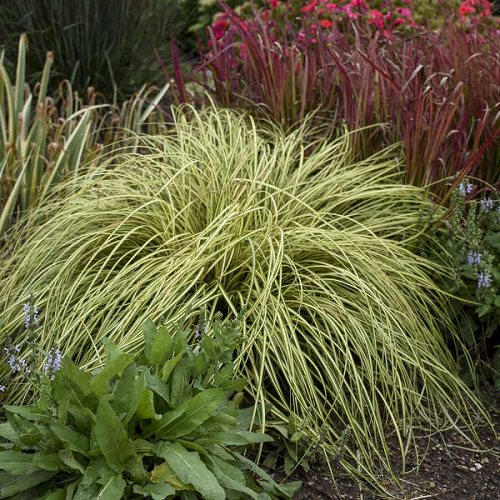 Ornamental Plants for Shade 3