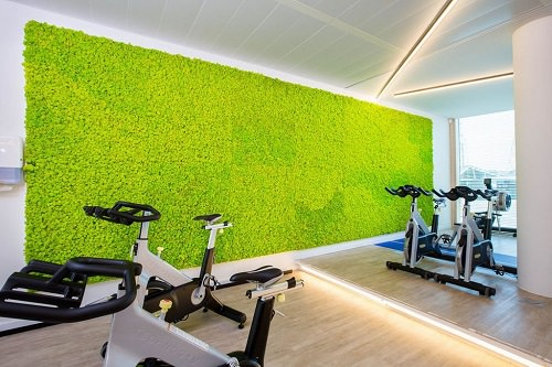 Best Plants for Gym 4