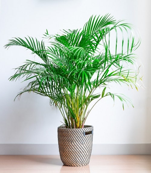 Best Plants for Gym 5