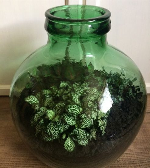 DIY Closed Terrarium Ideas 9