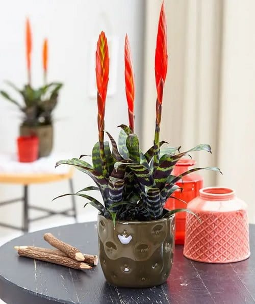 Different Types of Indoor Plants 5