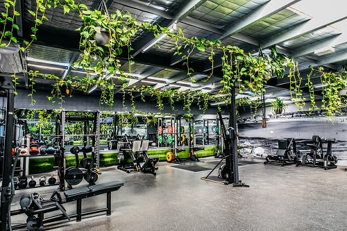 Best Plants for Gym
