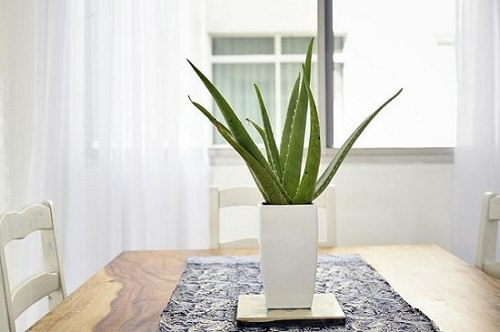 Most Popular Houseplants