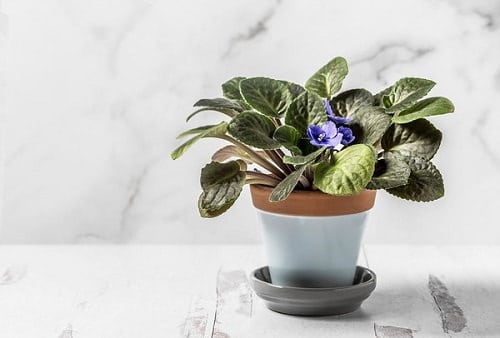 Most Popular Houseplants 6