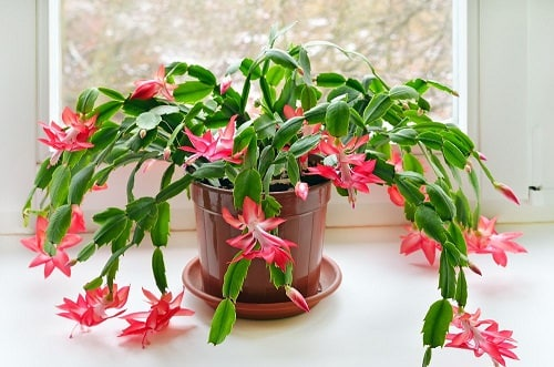 Most Oxygen Producing Houseplants 4