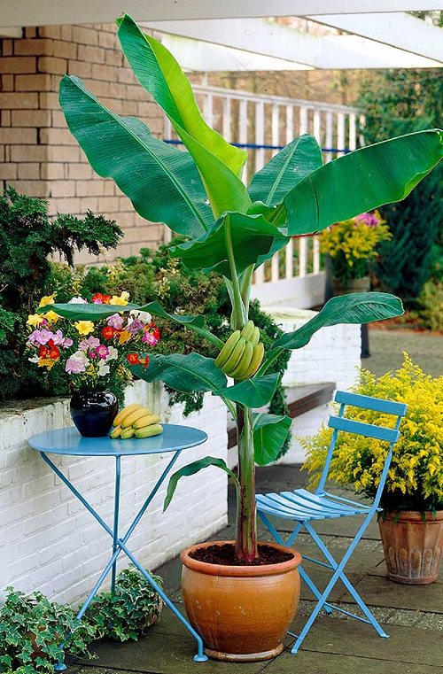 Fruits You Can Grow in Balcony 6