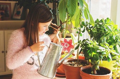 Houseplant Watering Rules 2