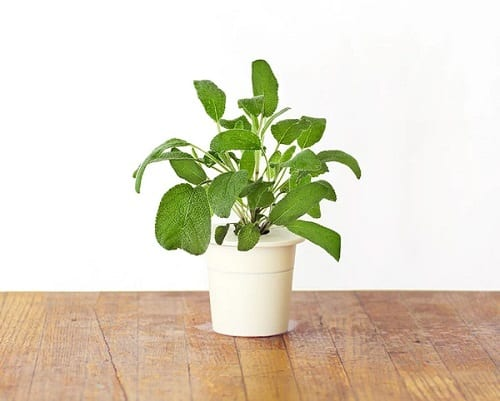 Good Luck Plants that Can Make You Lucky 9