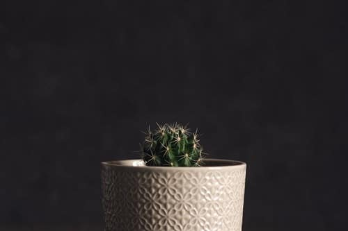 Best Indoor Cactus Plants 2