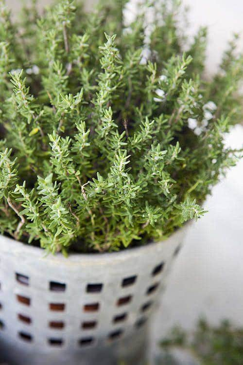 Plants for Anxiety and Depression 2