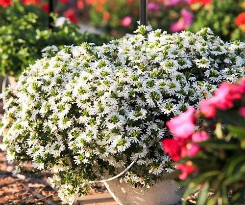 Types of White Flowers 19
