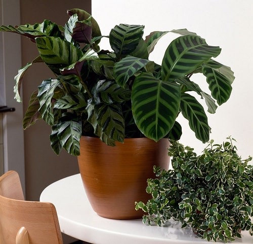 Most Popular Houseplants 5