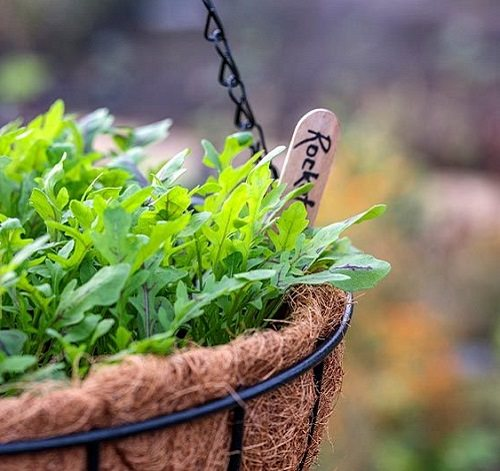 Best Herbs for Hanging Baskets 6