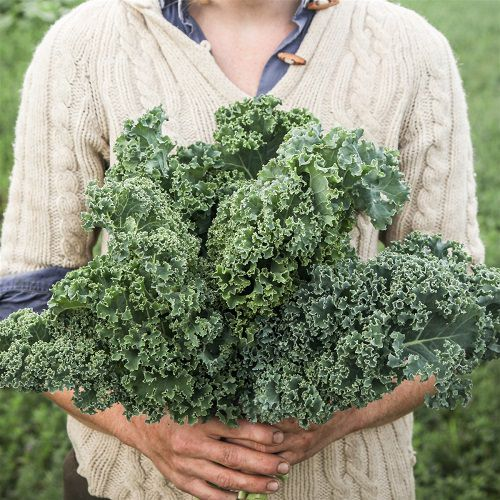 Best Types of Kale 5