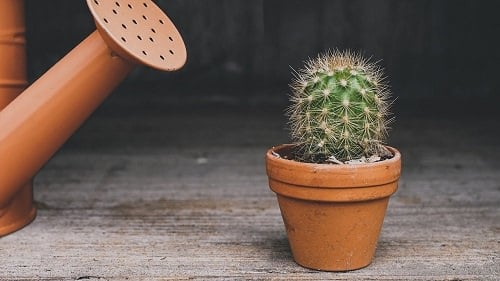 How to Grow Cactus from Seeds
