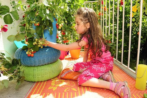 Fruits You Can Grow in Balcony 2