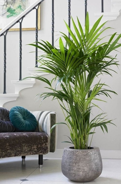Plants that Increase Humidity Indoors