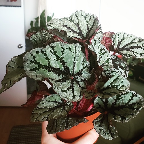 Beautiful Houseplants with Patterns 4