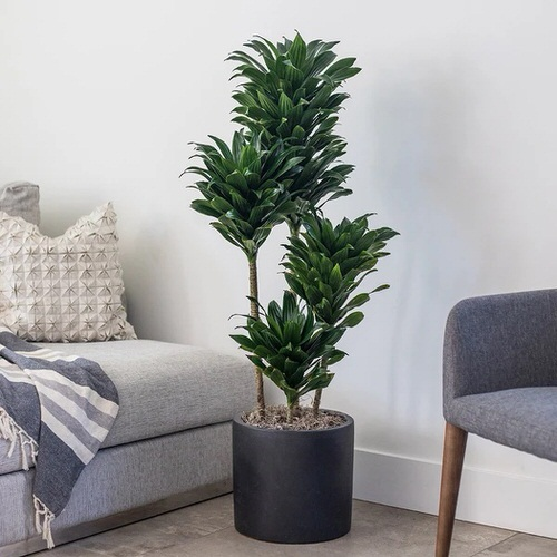 Indoor Plants According to Zodiac Signs 6