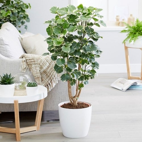 Beautiful Houseplants with Patterns 5