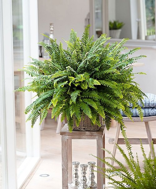 Plants that Increase Humidity Indoors 2