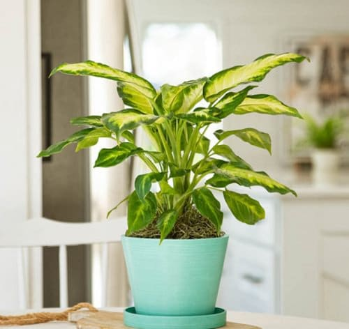 Plants that Increase Humidity Indoors 7