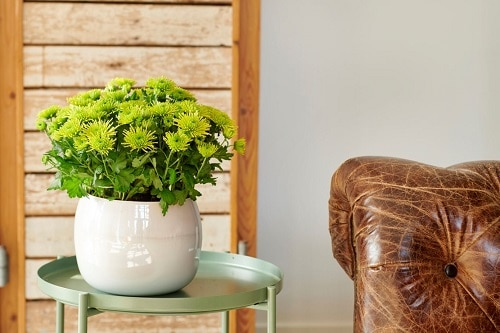 Plants that Increase Humidity Indoors 3