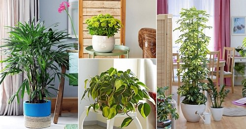Dry air in your home can lead to many health problems, which is why you should grow Indoor Plants that Increase Humidity for ideal relative humidity.