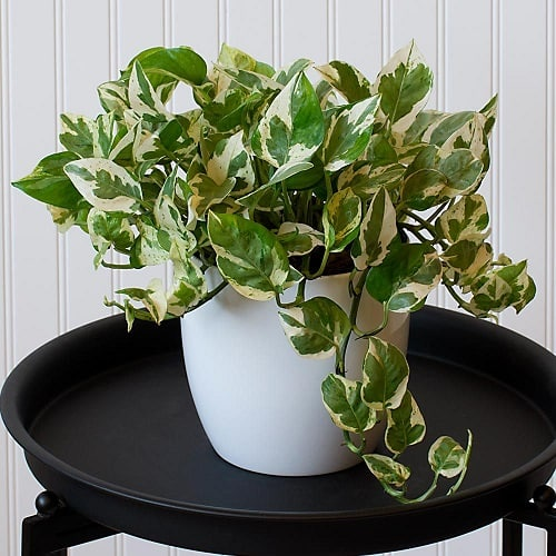 Beautiful Houseplants with Patterns 12