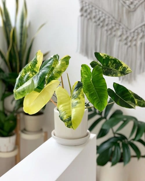 Beautiful Houseplants with Patterns 14