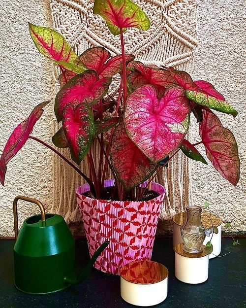 Indoor Plants According to Color Psychology 4