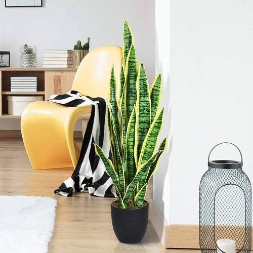 Indoor Plants According to Zodiac Signs 2
