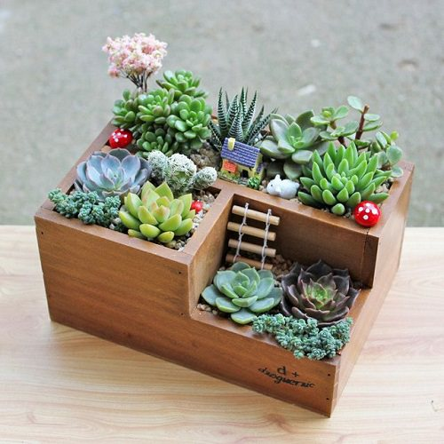 Copy these DIY Succulent Arrangement Ideas to make your home and garden more charming, modern, and eccentric.