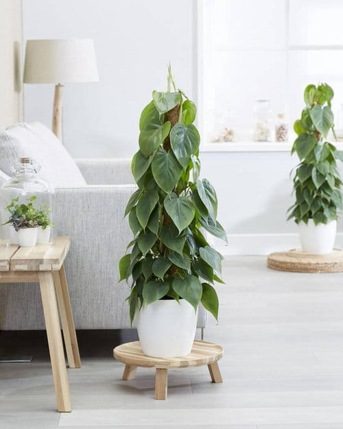 Indoor Plants According to Zodiac Signs 3