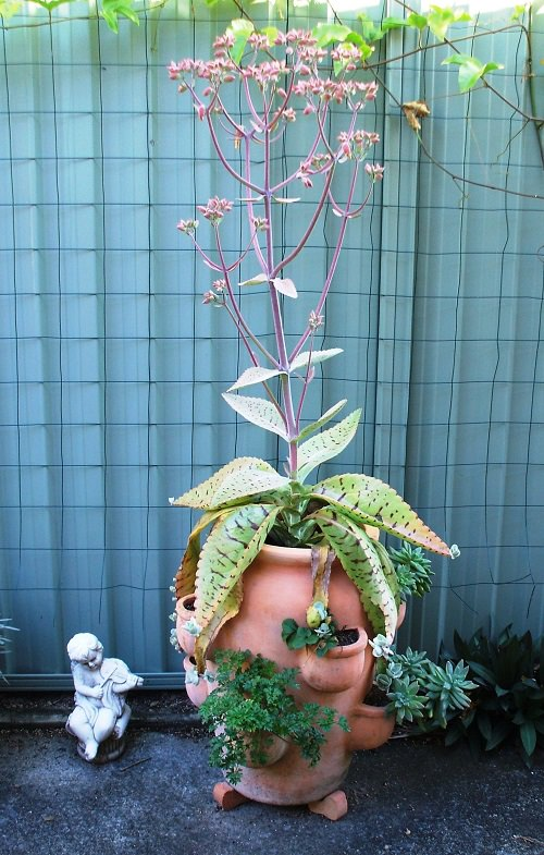 Succulents that Grow like a Weed 4