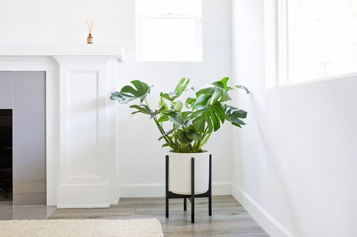 Indoor Plants for a Minimalist Home 3