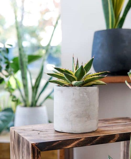 Beautiful Houseplants with Patterns 16