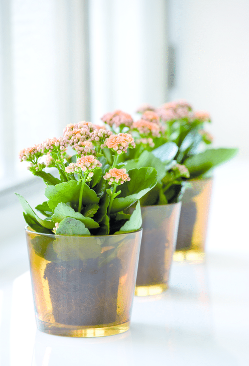 Houseplants that Grow In Dry Air 7