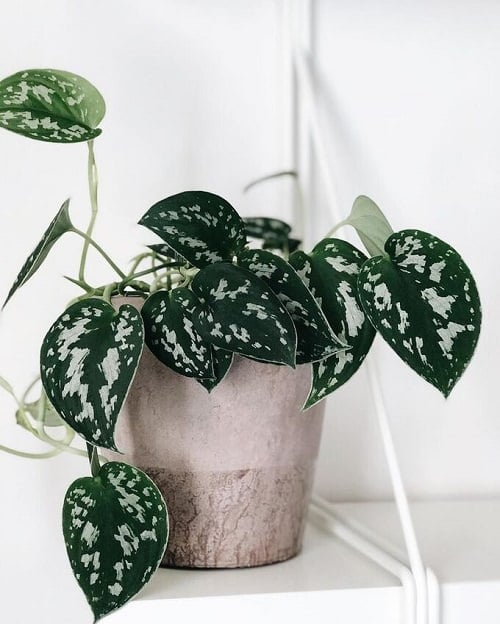 Beautiful Houseplants with Patterns 6
