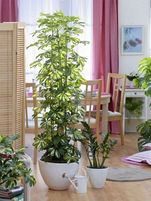 Plants that Increase Humidity Indoors 8