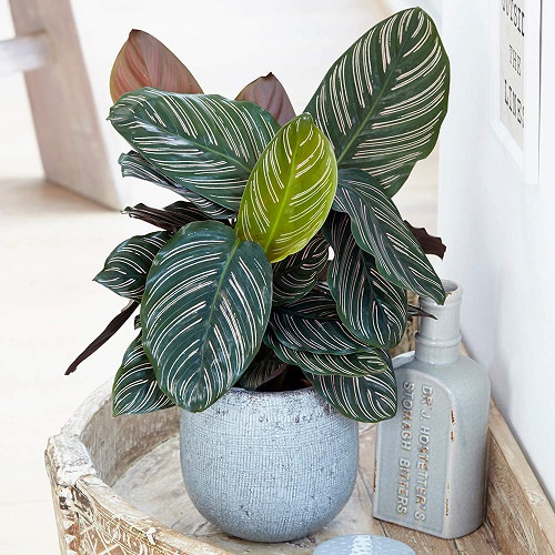 Beautiful Houseplants with Patterns 17